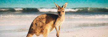 Depart Australia